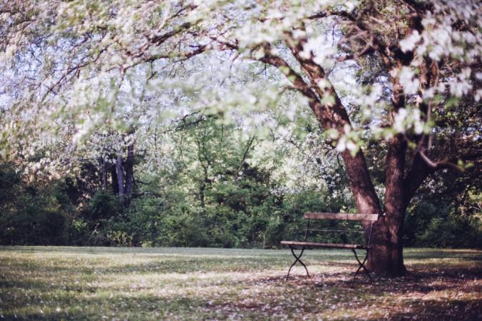Paysages La Roche sur Yon Agglo Paysagiste Chaillé sous les ormeaux Saint Florent des Bois Nesmy Aubigny